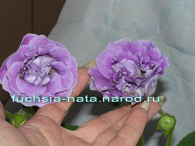 http://sa.uploads.ru/0Rwk1.jpg