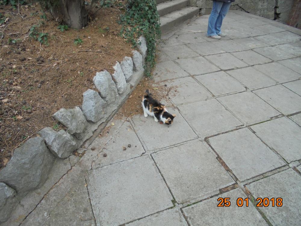 http://sa.uploads.ru/1c8ye.jpg