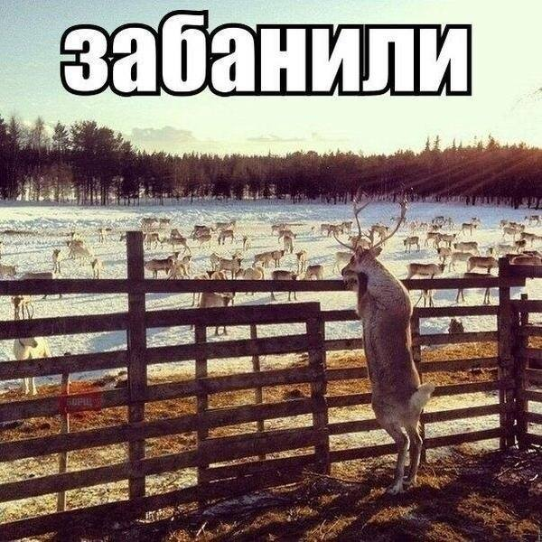 http://sa.uploads.ru/9IyxV.jpg