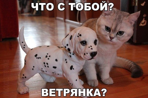 http://sa.uploads.ru/Dq4Zw.jpg
