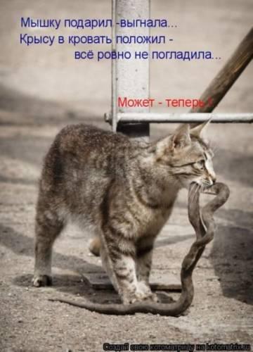 http://sa.uploads.ru/Nlbne.jpg