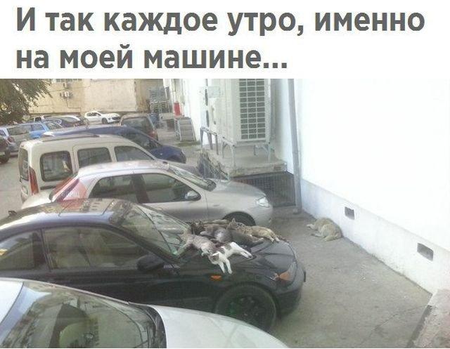 http://sa.uploads.ru/YDoAj.jpg