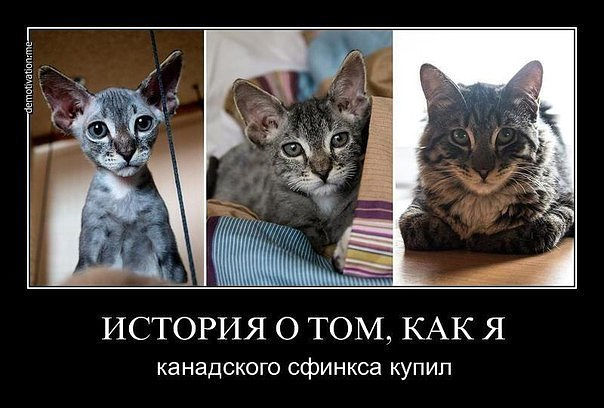 http://sa.uploads.ru/Z76iJ.jpg