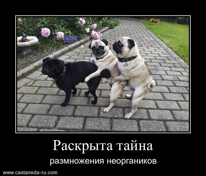 http://sa.uploads.ru/bGv5i.jpg