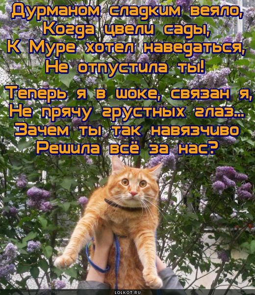 http://sa.uploads.ru/dcgWV.jpg
