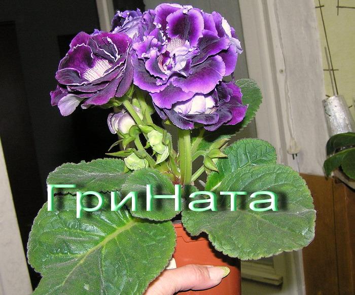 http://sa.uploads.ru/f0Qgv.jpg