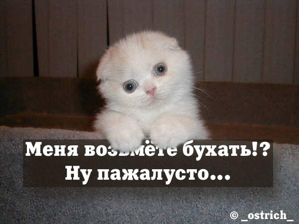 http://sa.uploads.ru/h2bFZ.jpg