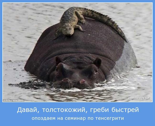 http://sa.uploads.ru/hynjx.jpg