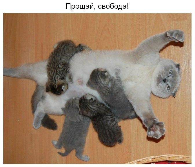 http://sa.uploads.ru/mOb3d.jpg