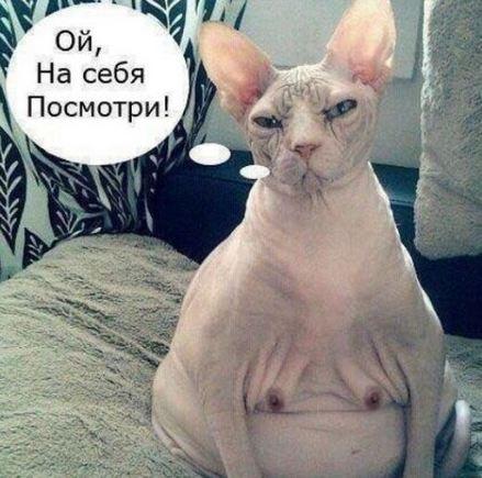 http://sa.uploads.ru/o8Ka1.jpg