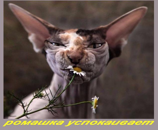 http://sa.uploads.ru/qWNEn.jpg