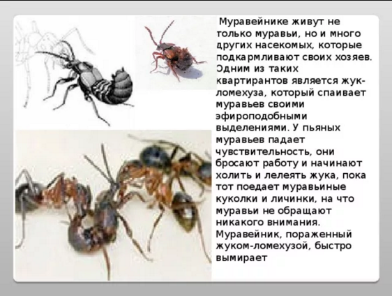 http://sa.uploads.ru/rfW0g.png