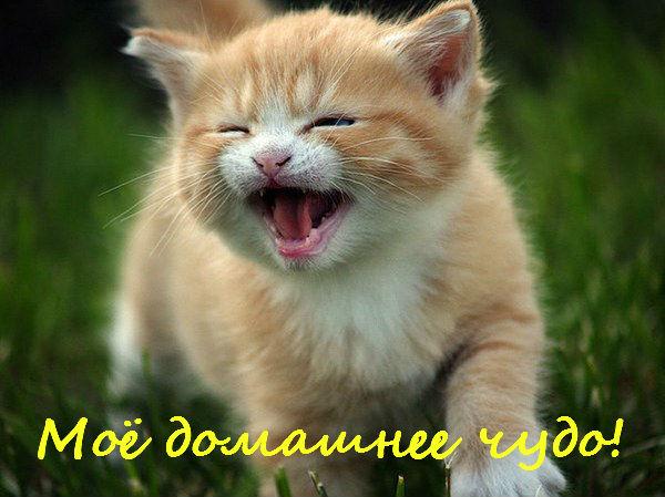 http://sa.uploads.ru/t/02YW8.jpg