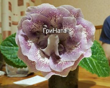 http://sa.uploads.ru/t/0aOQr.jpg