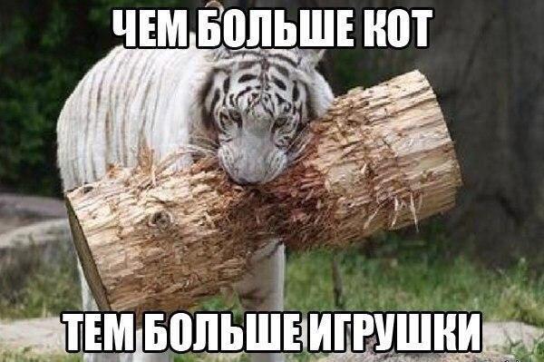 http://sa.uploads.ru/t/1Xplc.jpg