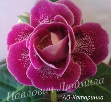 http://sa.uploads.ru/t/1Xw8P.jpg