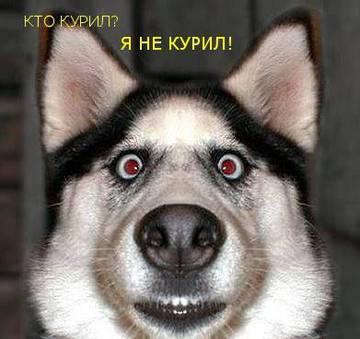 http://sa.uploads.ru/t/24PKR.jpg