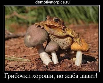 http://sa.uploads.ru/t/30Rml.jpg