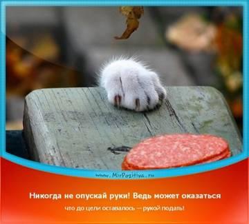 http://sa.uploads.ru/t/3MjAl.jpg
