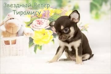 http://sa.uploads.ru/t/4qIQN.jpg