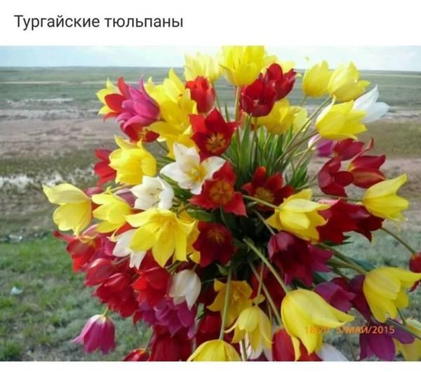 http://sa.uploads.ru/t/5IRVe.jpg