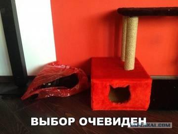 http://sa.uploads.ru/t/6ETt2.jpg