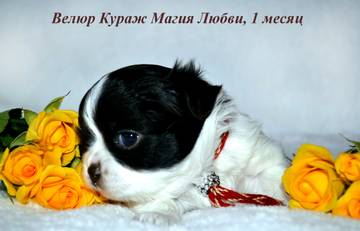 http://sa.uploads.ru/t/7H9TZ.jpg