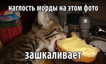 http://sa.uploads.ru/t/89kBM.jpg