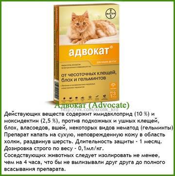 http://sa.uploads.ru/t/B2sxU.jpg