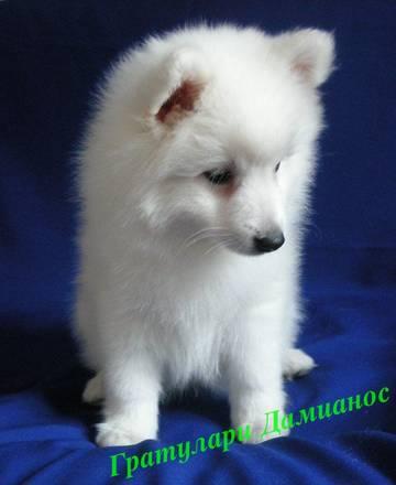 http://sa.uploads.ru/t/BWFGy.jpg