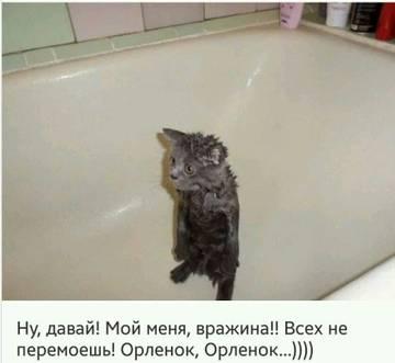 http://sa.uploads.ru/t/DAG2N.jpg