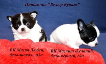 http://sa.uploads.ru/t/FIvJY.jpg