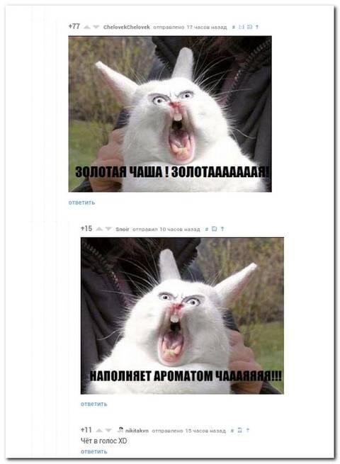 http://sa.uploads.ru/t/FLRDx.jpg