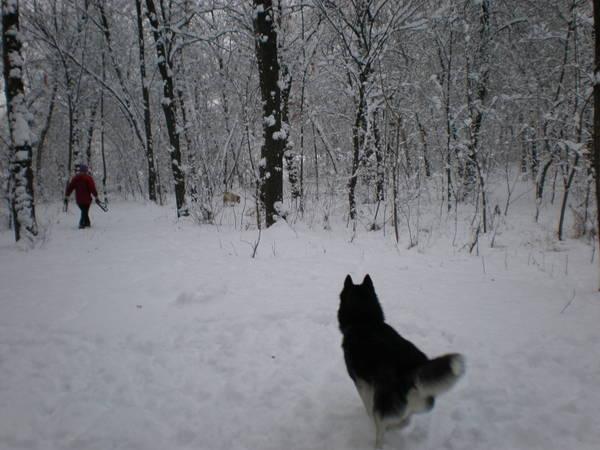 http://sa.uploads.ru/t/H0lPa.jpg