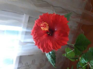 http://sa.uploads.ru/t/JZg0z.jpg