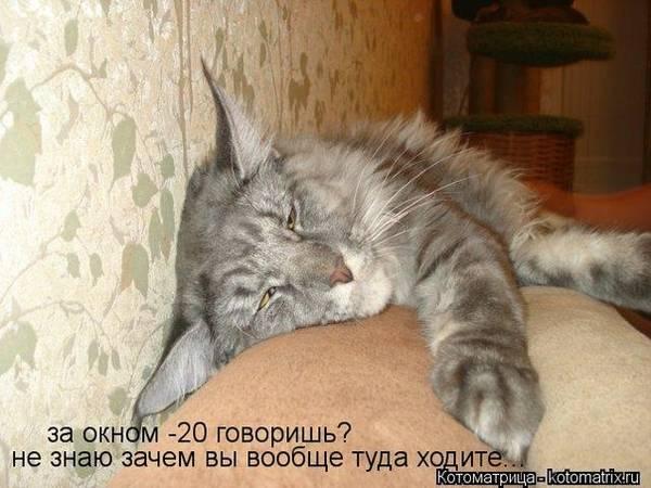 http://sa.uploads.ru/t/NcoyW.jpg