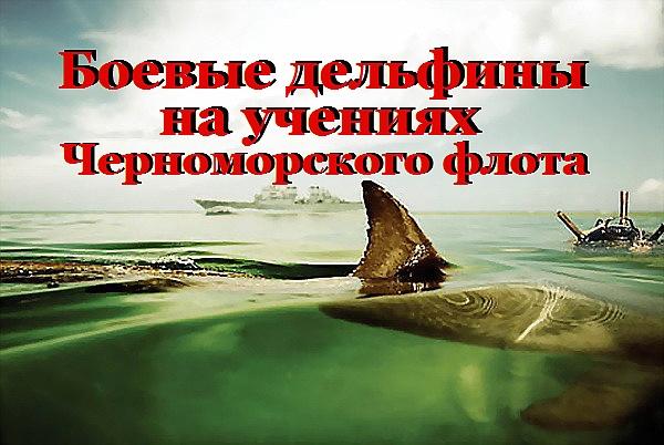 http://sa.uploads.ru/t/NgoGY.jpg