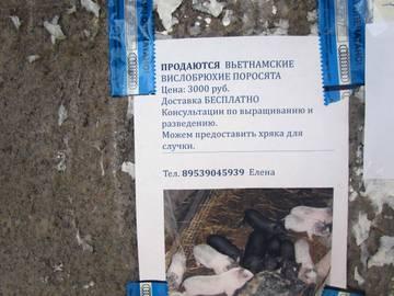 http://sa.uploads.ru/t/ODosu.jpg