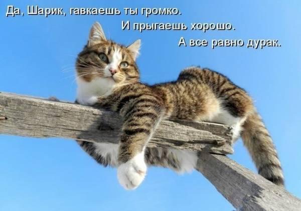 http://sa.uploads.ru/t/Pv8eY.jpg
