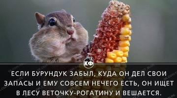 http://sa.uploads.ru/t/Rb9xO.jpg