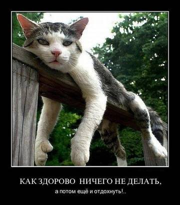 http://sa.uploads.ru/t/S4hWC.jpg