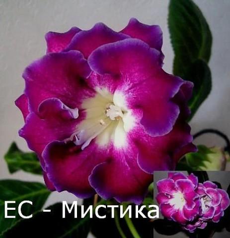 http://sa.uploads.ru/t/TSa7v.jpg