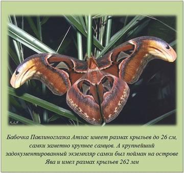 http://sa.uploads.ru/t/U497u.jpg