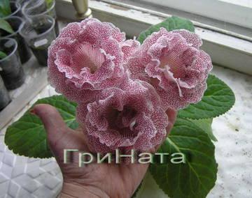 http://sa.uploads.ru/t/VDhrx.jpg
