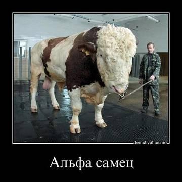 http://sa.uploads.ru/t/Wz36p.jpg