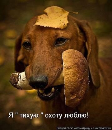 http://sa.uploads.ru/t/XIy3h.jpg