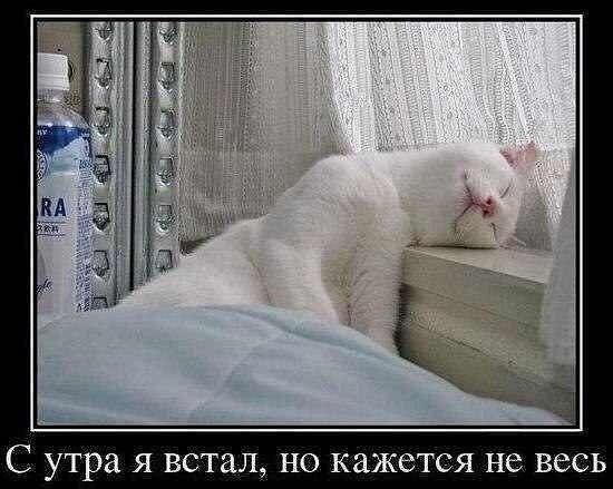 http://sa.uploads.ru/t/ZJYFj.jpg