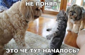 http://sa.uploads.ru/t/a2dOL.jpg