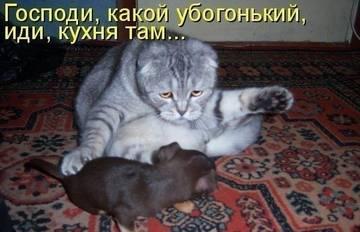http://sa.uploads.ru/t/cBaCu.jpg