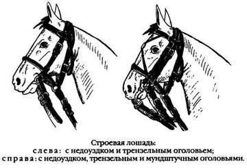http://sa.uploads.ru/t/diDAj.jpg